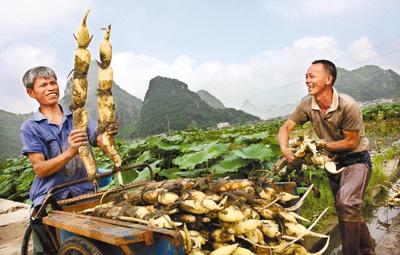 中國農業産業發展基金 探索農業投資公私合作模式