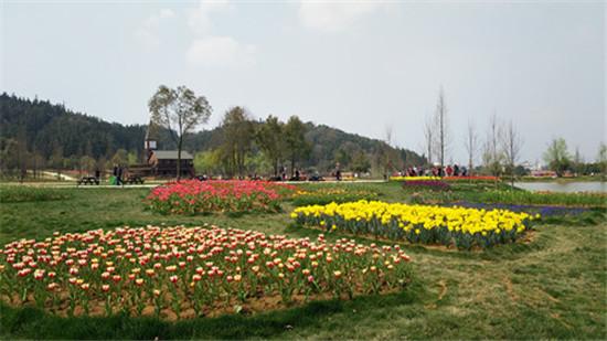 江西省规模最大的郁金香花展23日在南昌先锋小镇启幕